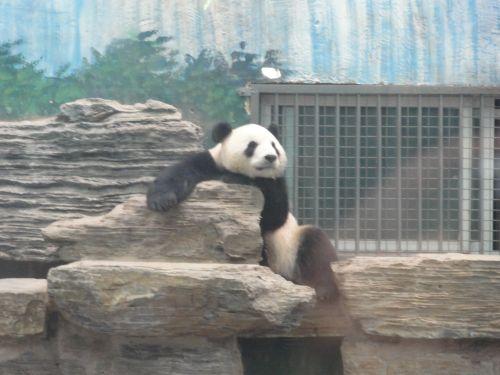だれパンダ
