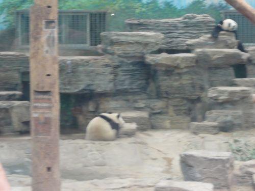 パンダに幻滅