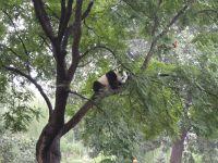 木の上のパンダ