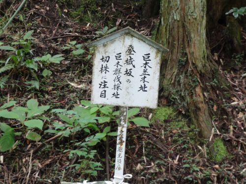 巨木並木跡