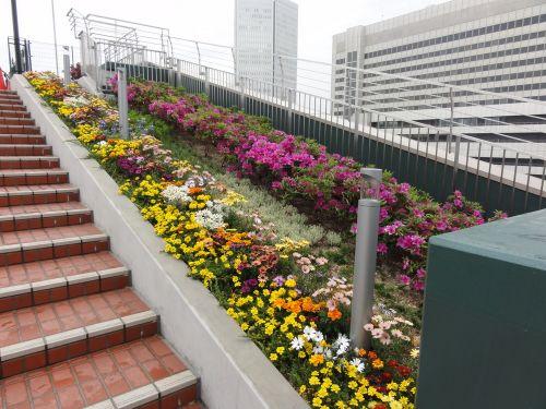 どの花みても、きれいだな